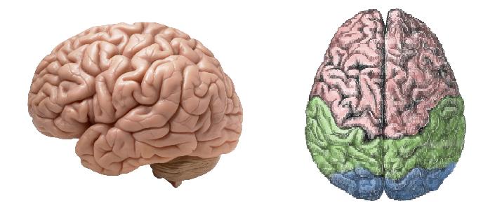 Y a-t-il des différences entre un cerveau progressiste et un cerveau conservateur?